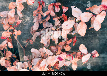 vintage red leaf pastel color to Creative  pattern and texture design with  background banner - Stock Photo
