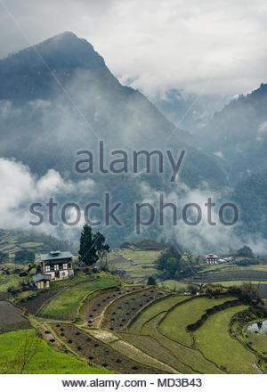 Rice Terraces, Jigme Dorji National Park, Gasa District, Bhutan by Nils Leonhardt - Stock Photo