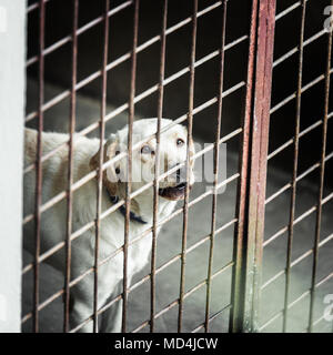 White dog locked in a cage - Stock Photo