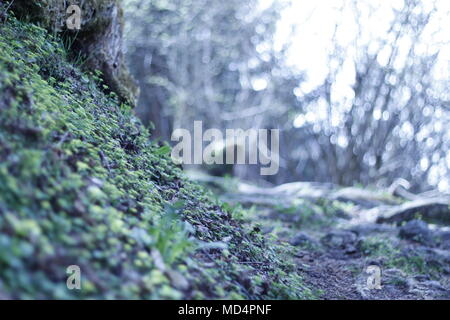Hiking in Mayrhofen, Austria, forest with much moss and pines. Very green and beautiful forest enviroment. - Stock Photo