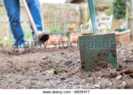 Garden spade in a vegetable garden in front of a gardener turing the soil over in early spring. UK - Stock Photo