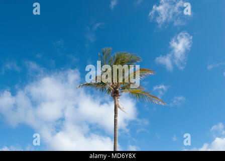 Tropical three with blue sky on background. Concept of vacation and endless summer - Stock Photo