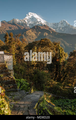 Vertical shot encompasses paved trail leading through forest of Himalayan foothills towards majestic snow-capped peaks of Nepal's Annapurna Mountains - Stock Photo