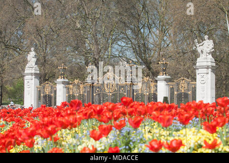 London UK. 19th April 2018. UK Weather: Pedestrians walk past a bed of red tulips bathed in spring sunshine  opposite Buckingham Palace. Today has been the hottest of the year Credit: amer ghazzal/Alamy Live News - Stock Photo