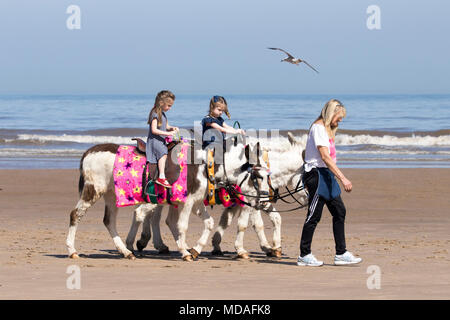 Donkey rides on a sunny Day at the Seaside, Blackpool, Lancashire. 19th April 2018.  UK Weather.  A fabulous sunny and very warm day over the north west of England as families head out for some fun in the sun on the sands of Blackpool seafront in Lancashire. - Stock Photo