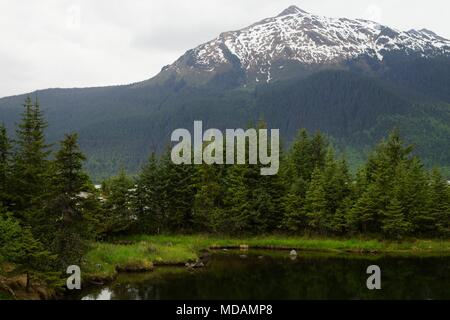 A patch of spruce forest next to the black water with a show capped mountain on the foreground next to Mendenhall glacier, Alaska. - Stock Photo