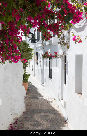 Narrow streets with whitewashed Andalucian houses in mountain village, Frigiliana, Malaga Province, Costa del Sol, Andalucia, Spain, Europe - Stock Photo