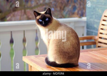 Domestic Cats - Stock Photo