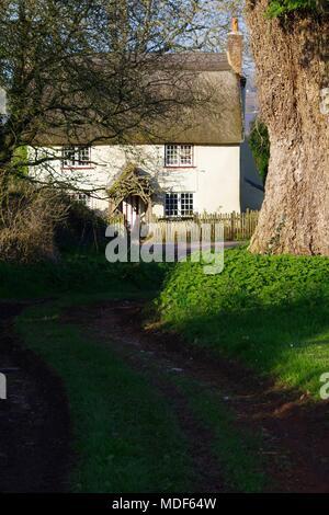 Oak Tree Cottage   English Cottage Series