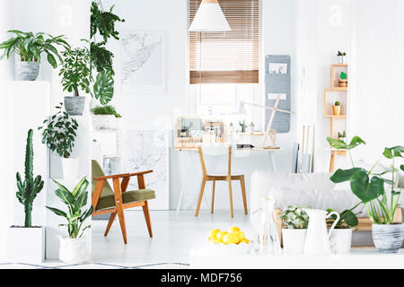 Botanical home office interior with white walls, wooden chair and lemons in a bowl - Stock Photo