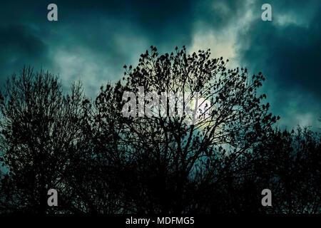 nightmarish forest scene - Stock Photo