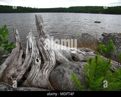 Dead wood at Kill Dog Cove, Sherbrooke Lake, Parkdale, Nova Scotia, Canada. - Stock Photo