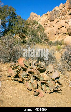 Rock Climb Hidden Valley Big Rocks Prickly Pear Cactus Mojave Desert Joshua Tree National Park, California - Stock Photo