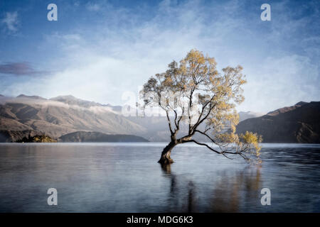 The lone tree of Lake Wanaka, South Island, New Zealand. - Stock Photo