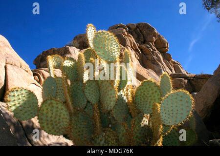 Rock Climb Hidden Valley Big Rocks Prickly Pear Cactus Mojave Desert Joshua Tree National Park California - Stock Photo