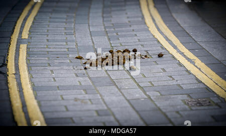 Pile of Horse Manure in middle of road. - Stock Photo