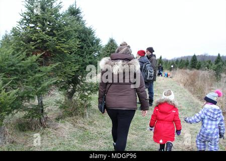 People walking on a path in search of a green holiday tree