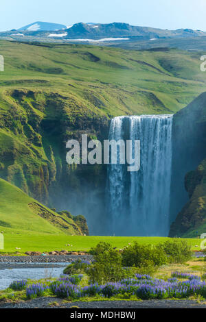 Skogafoss waterfall and a flock of sheep grazing in a pasture; Skoga, Iceland - Stock Photo