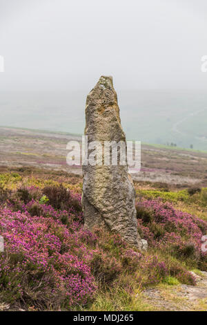 Standing stone amidst pink Heather in the mist in the North Yorkshire moors; Yorkshire, England - Stock Photo