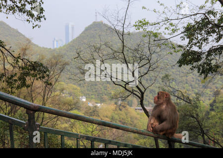 Cityscape of Guiyang at noon, Guizhou Province, China with monkey on foreground. - Stock Photo