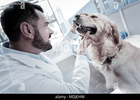 Professional smart man checking dogs health - Stock Photo