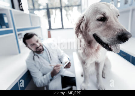 Nice beautiful dog sitting in the vet - Stock Photo