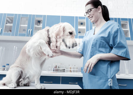 Positive young woman taking dogs paw - Stock Photo