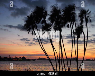 Silhouetted palm trees at sunset, Clearwater, Florida, USA 2017, © Katharine Andriotis - Stock Photo