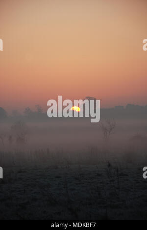 Daybreak over a misty field with trees and shrubs in the foreground - Stock Photo
