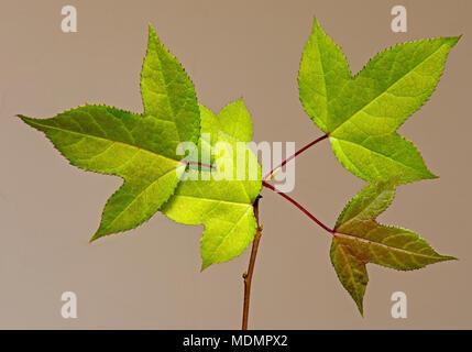 Still Life - Leaves