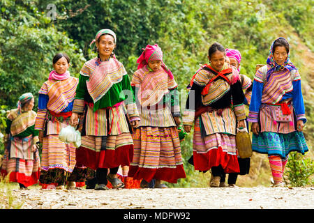 nr. Bac Ha, Vietnam; Flower Hmong women returning from Lung Phin market, Ta Chai village. - Stock Photo