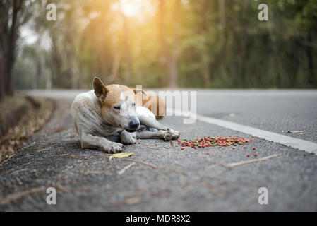 Stray dogs lie on the side of the road with food laid around them - Stock Photo