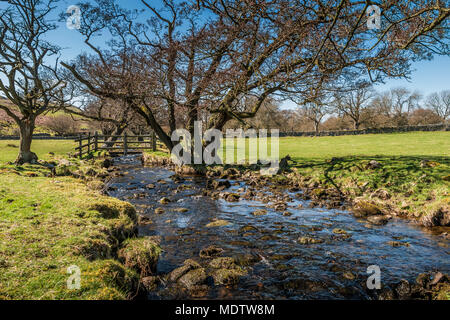 North Pennines Landscape, Crossthwaite Beck near Middleton in Teesdale in spring - Stock Photo