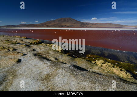 Laguna Colorada landscape. Eduardo Avaroa Andean Fauna National Reserve. Bolivia