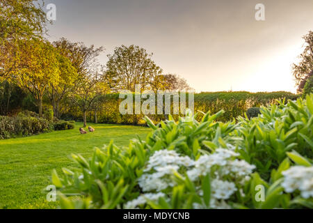 Shallow focus, summertime view of a delicate, white flower shrub and blossom seen in a large and well maintained private garden - Stock Photo