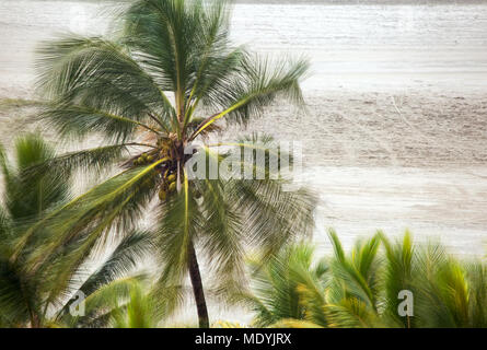 A strong gale blows over the palmtress in a caribbean beach. - Stock Photo