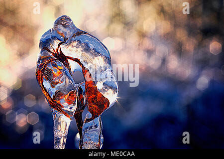 Frozen dried plant after Freezing Rain Storm, Eastern Ontario, Canada - Stock Photo