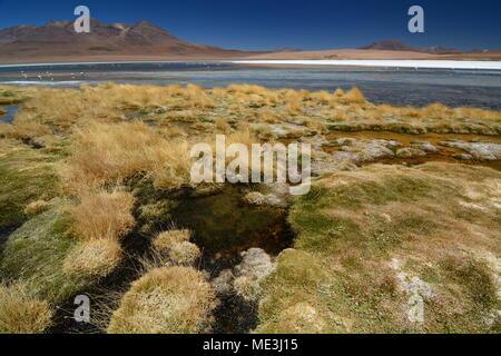 Laguna Canapa. Potosi department. Bolivia