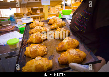 Close-up of a female baker holding a baking sheet with fresh delicious croissants - Stock Photo