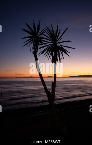 A palm tree taken at sunset with Gibraltar in the background. - Stock Photo