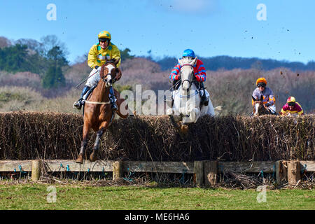 Two horses and riders jumping a fence during a point-to-point event - Stock Photo