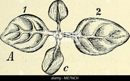 . Die mutationstheorie. Versuche und beobachtungen über die entstehung von arten im pflanzenreich . - Stock Photo