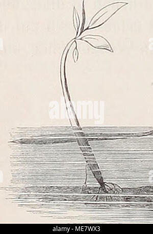 . Die Loango-Expedition ausgesandt von der Deutschen Gesellschaft zur Erforschung Aequatorial-Africas, 1873-1876. Ein Reisewerk in drei Abtheilungen . Stock Photo