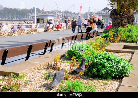 Weymouth, Dorset. 21st April 2018. Pigeons sun themselves on a summery-feeling  Weymouth promenade Credit: stuart fretwell/Alamy Live News - Stock Photo