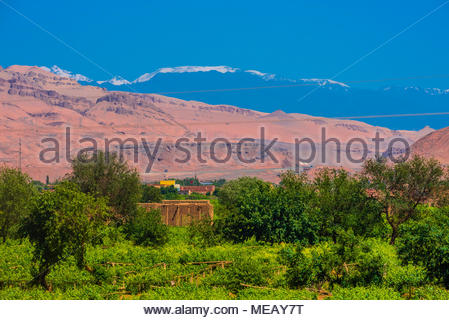Grape drying houses and vineyards for grapes (to make raisins) near the Astana Cemetery is an ancient cemetery 37 kilometres (23 mi) southeast of Turp - Stock Photo