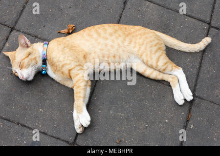 Ginger cat asleep on pavement, Bangkok, Thailand - Stock Photo