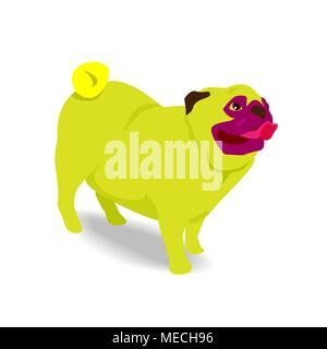 Yellow pug dog stick out tongue with shadow in white background - Stock Photo