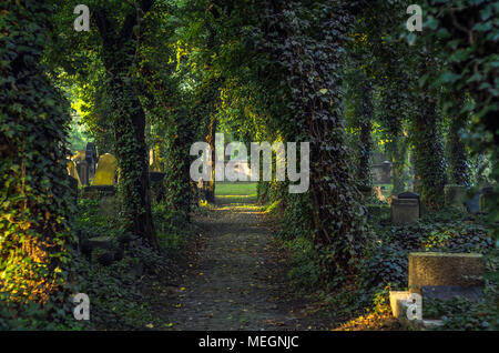 Paving main alley on the mysterious Old Jewish Cemetery with gravestones and ivy covered trees during sunrise in Zabrze, Silesian Upland, Poland. - Stock Photo