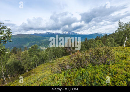 mountain panorama at the forest line, Norway, on the way to the top of mountain Molden near Hafslo, vegatation of Norwegian mountainscape - Stock Photo