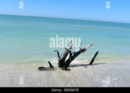 Driftwood in Sanibel - Stock Photo